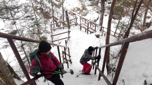 Hutan Bersalju di Jepang