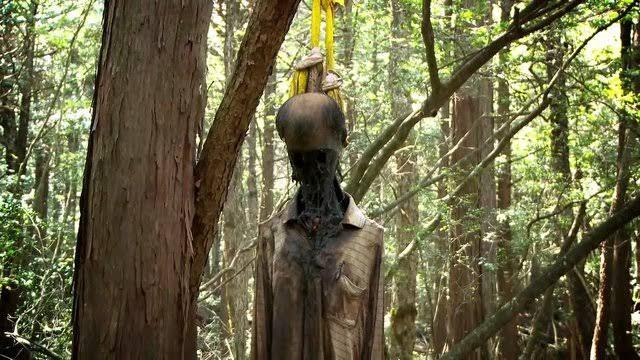 Fakta Tersembunyi Dari Hutan Terseram Aokigahara